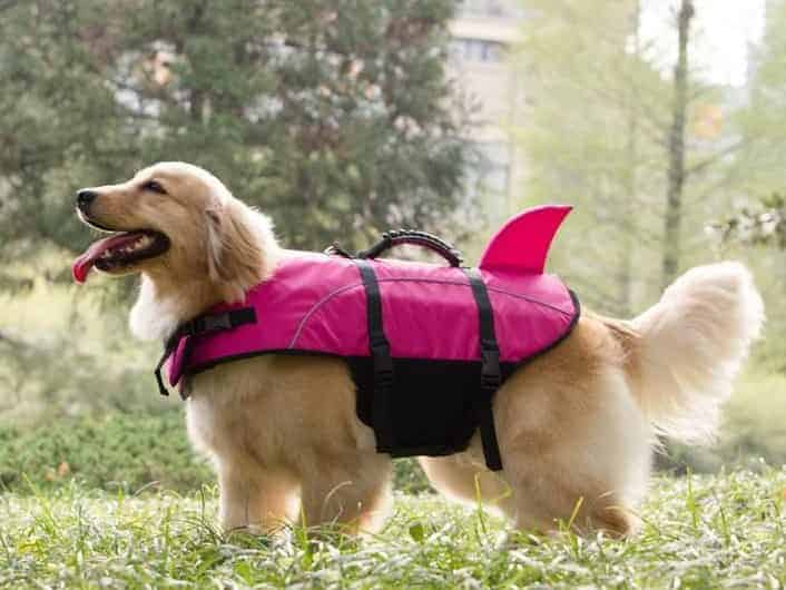 a dog with a pfd