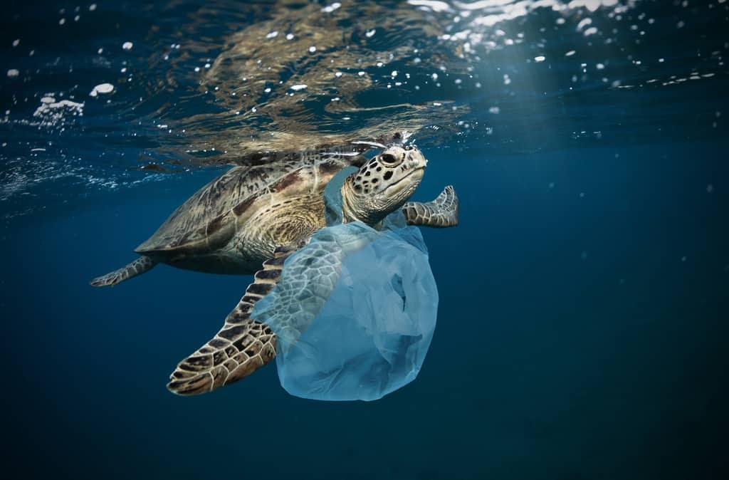 Plastic Pollution Statistics & Facts [2021]